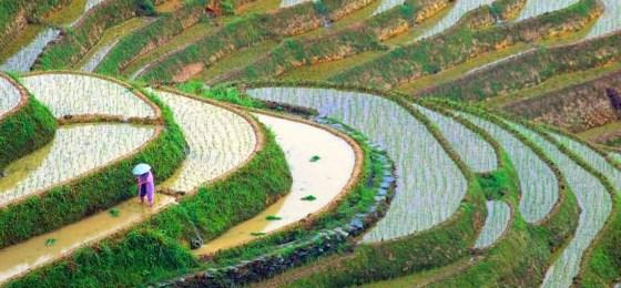 Agricultura y Cultura